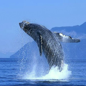 Whale eatching